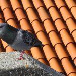 Jak chronić dach i taras przed ptakami?